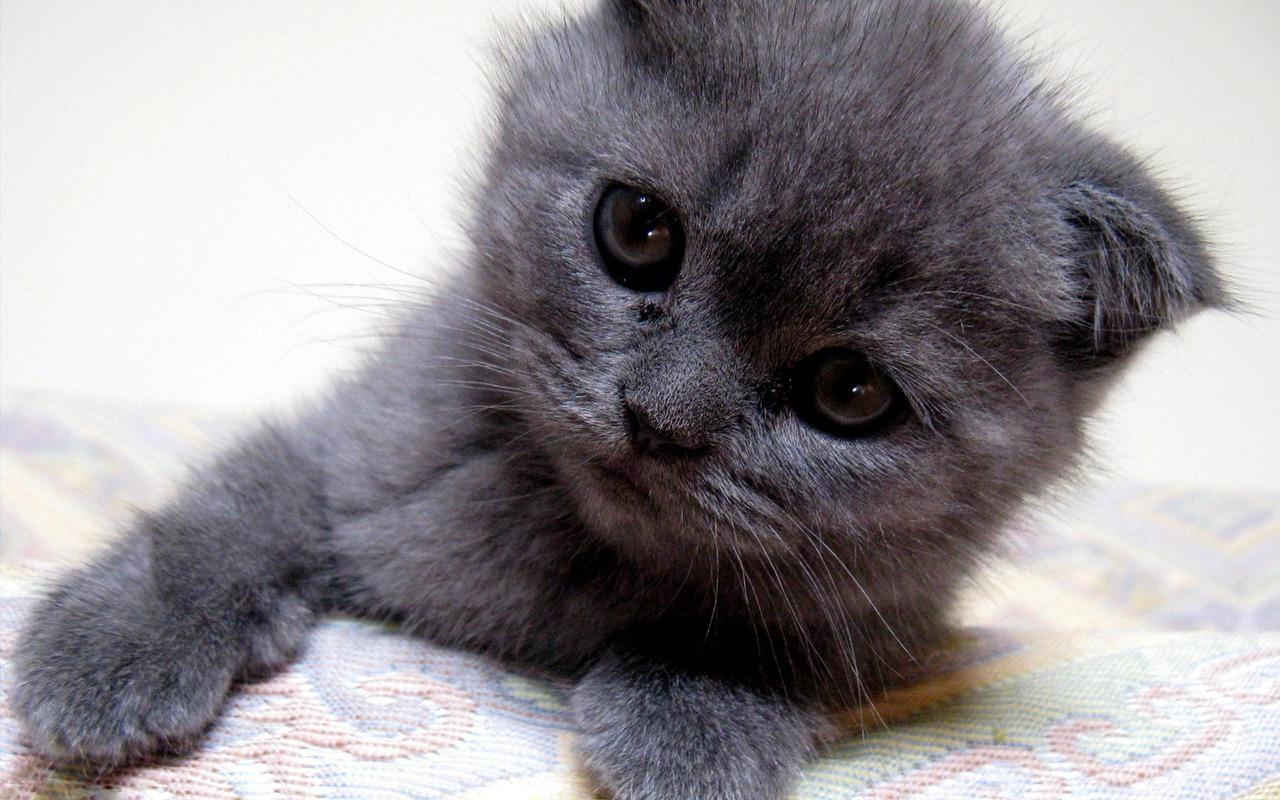 Как назвать котенка