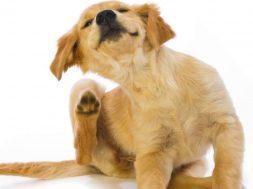 Подбираем ошейник для собаки